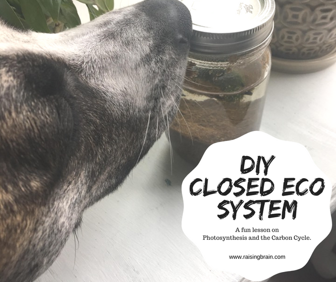 Creating a Mini Closed Ecosystem at Home!