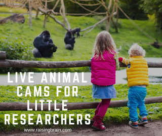 Live Animal Cams - For Little Researchers