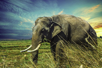 elephant-2729415_1920.jpg