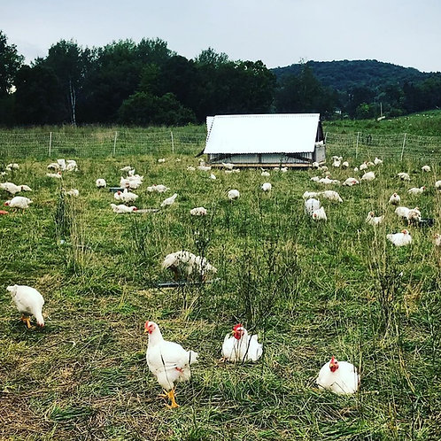 Certified Organic Pastured Chicken - Available Sept 2021