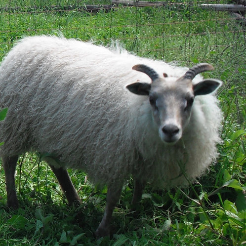 100% Grassfed Lamb - Available Oct 2021