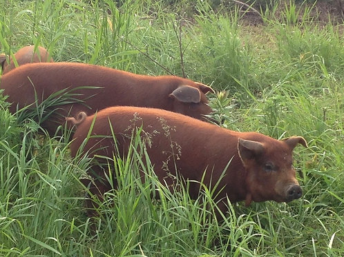 Pasture-raised Pork - Available November 2021