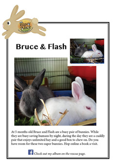 Bruce and Flash