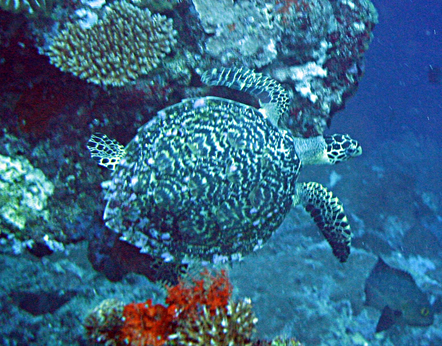 Day 5a Solomon Islands 2006 058.jpg