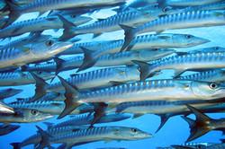 Day 11a Solomon Islands 2006 032.jpg