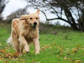 Dog Walking 1.jpg