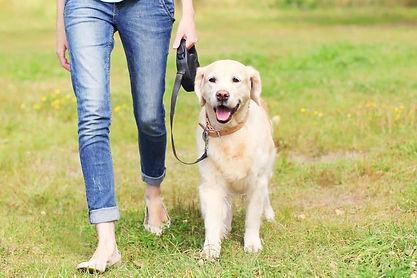 Dog Walking 3.jpg