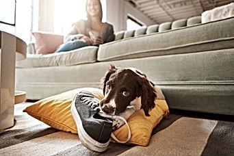 dog-chewing.jpg