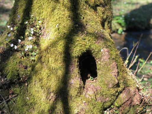 Návšteva elfov v Brusne