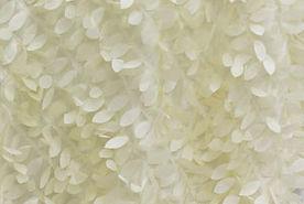 white-petal.jpg