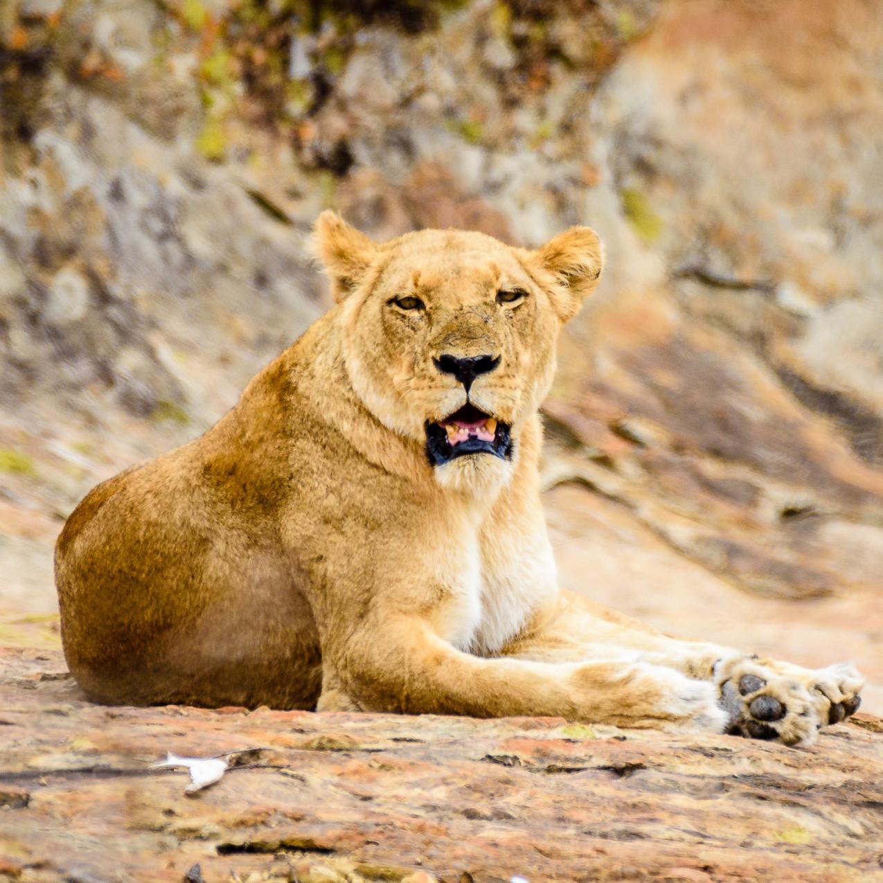 South Africa Kruger-903