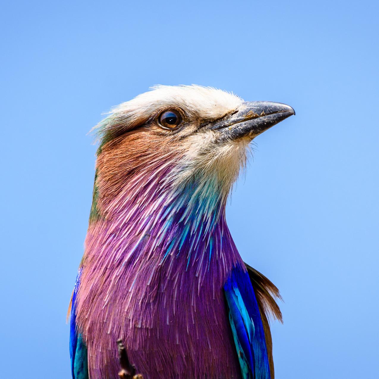 South Africa Kruger-352