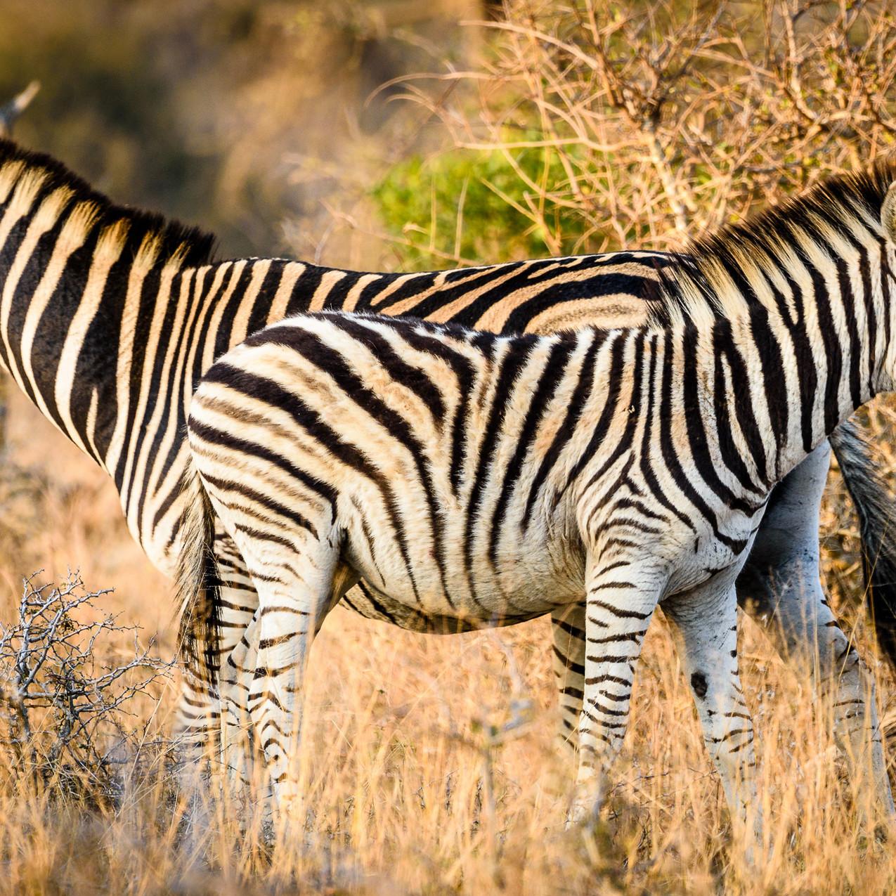 South Africa Kruger-1012