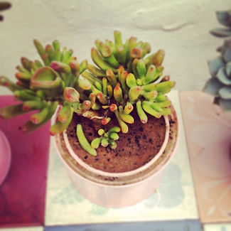 Muhy succulents. On sale!.jpg