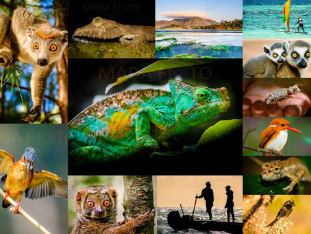 Kalender 2021 die schönsten Fotos aus Madagaskar
