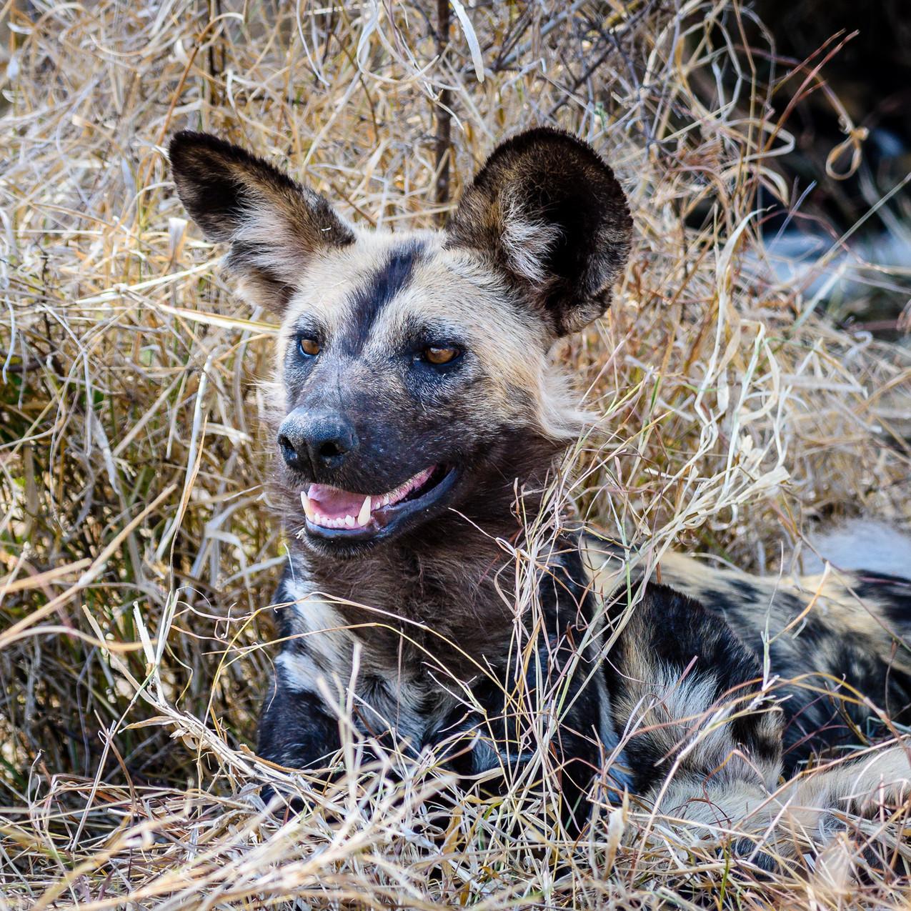 South Africa Kruger-371