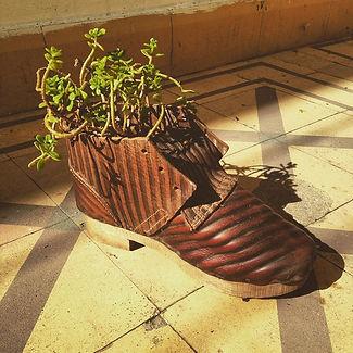 Maceta.zapato  Últimos 4!! Muyh!.jpg