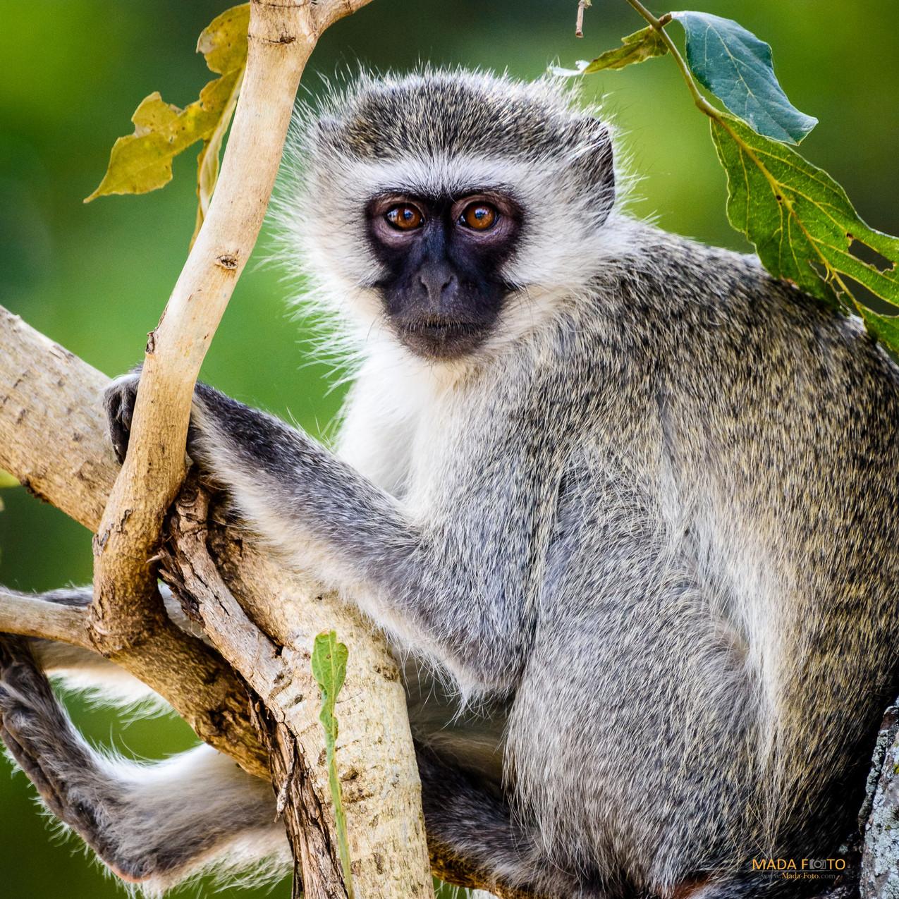South Africa Kruger-383