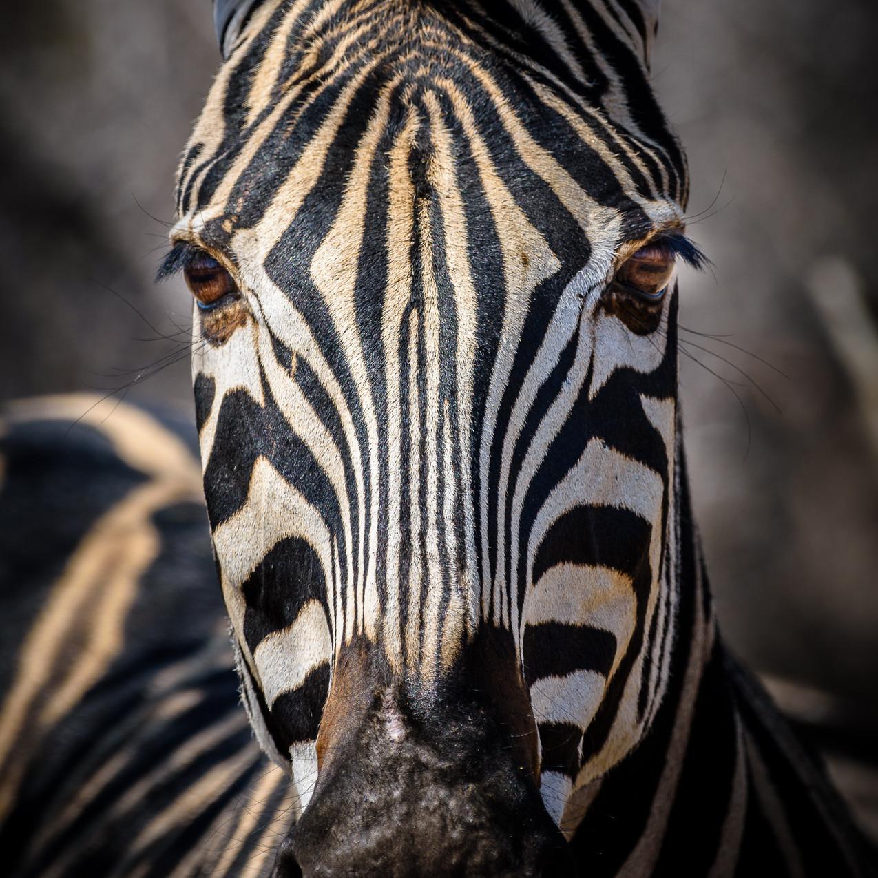 South Africa Kruger-344