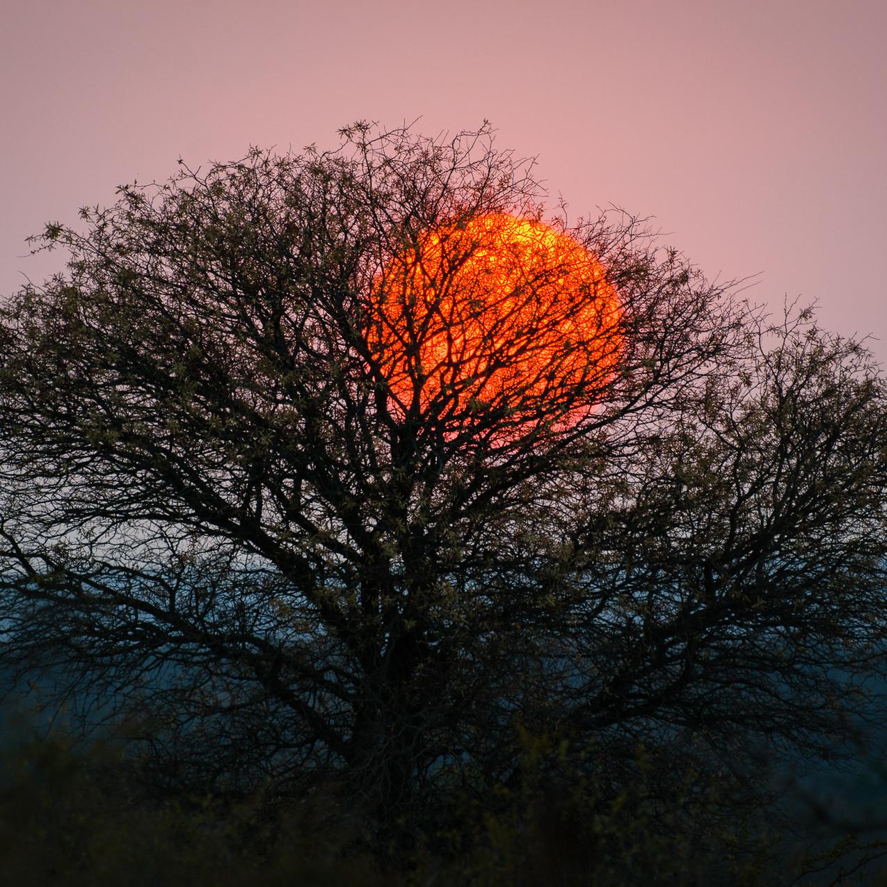 South Africa Kruger-126