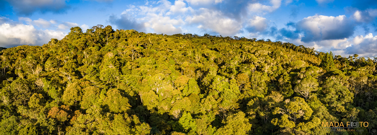Drone Saha Forest Camp-0251-HDR-Pano
