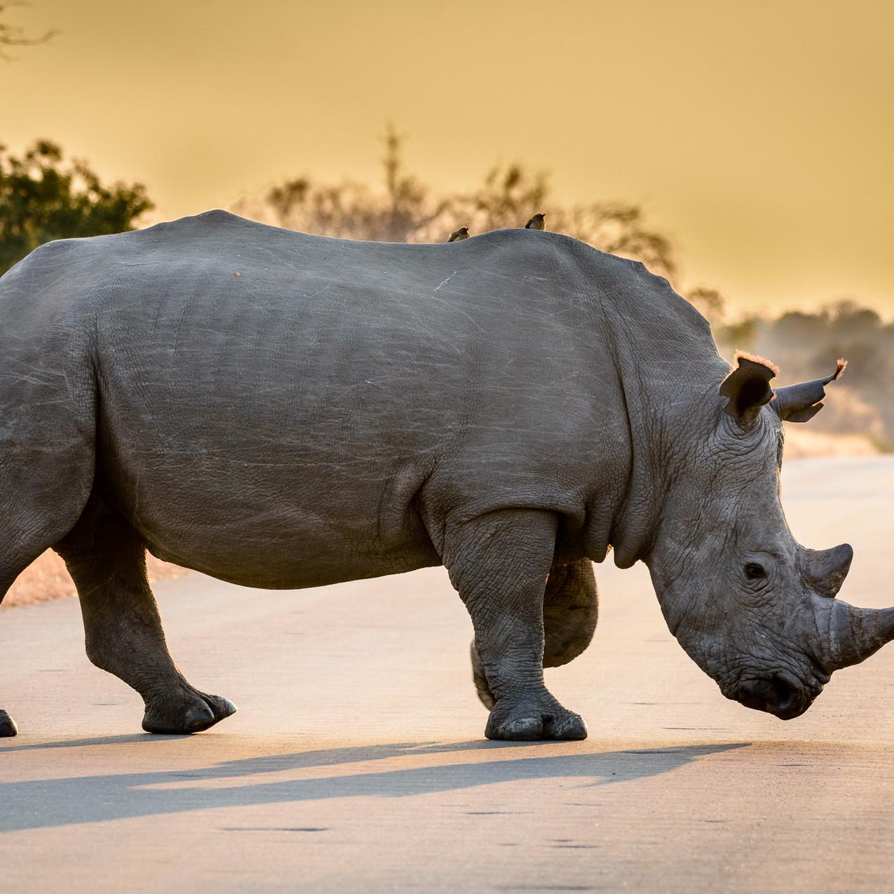 South Africa Kruger-297