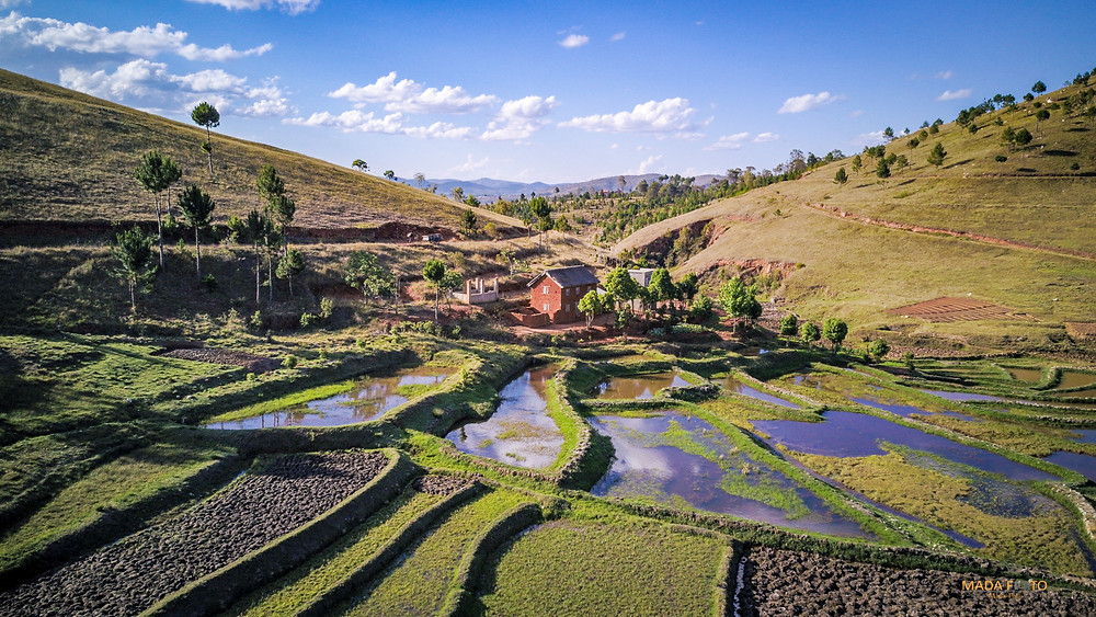 Rice fields, Madagascar