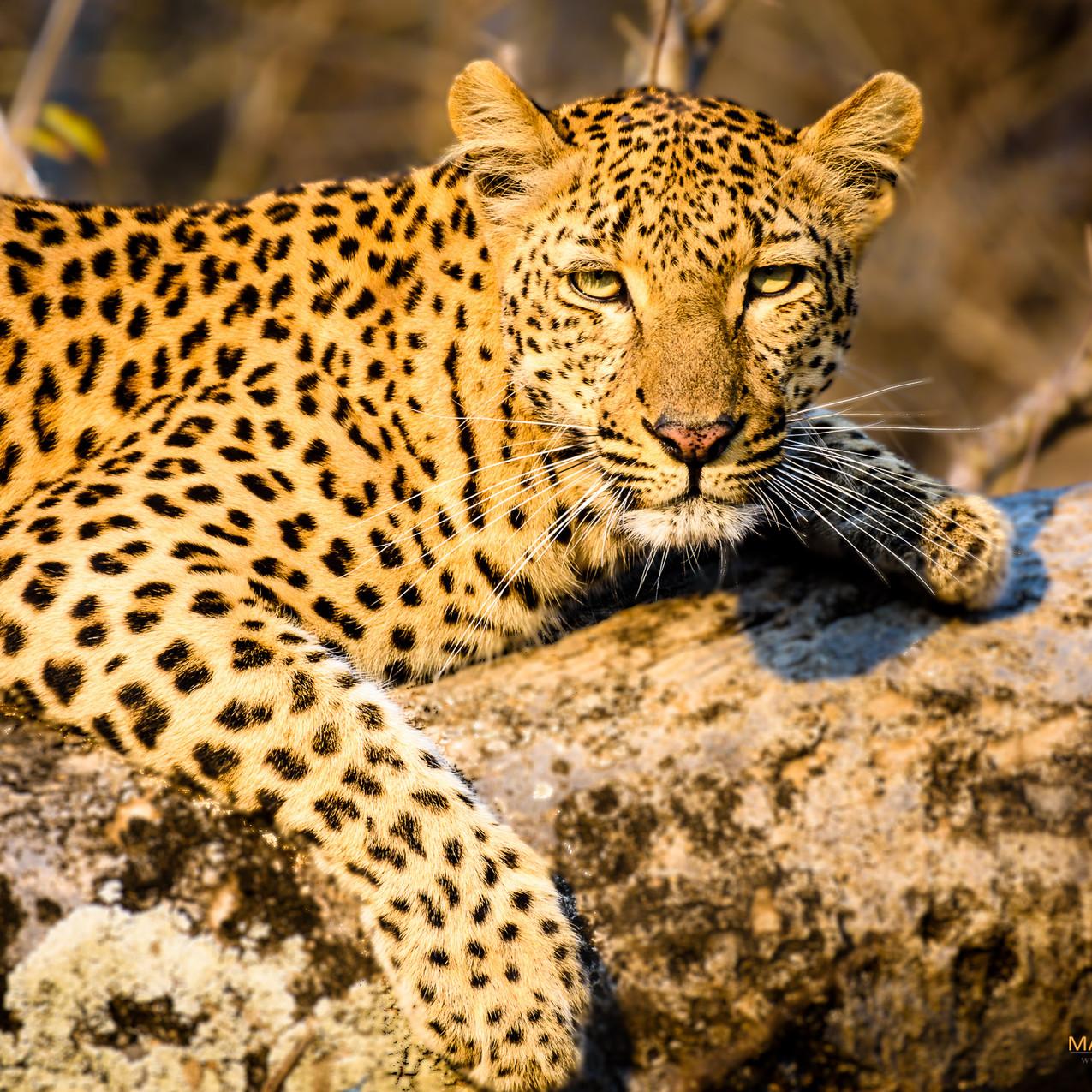 South Africa Kruger-717