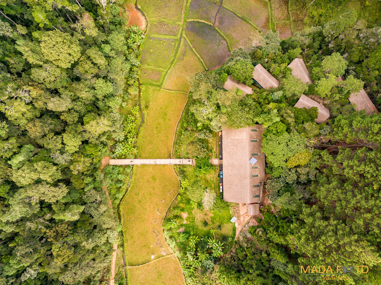 Drone Saha Forest Camp-0175-HDR