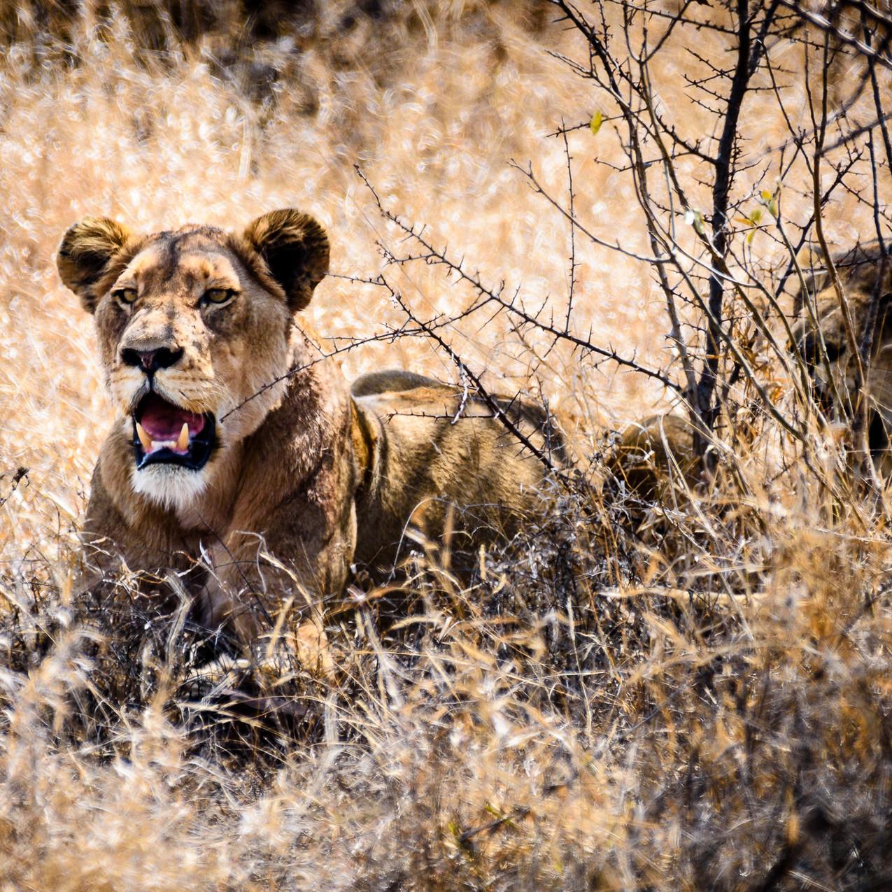 South Africa Kruger-378