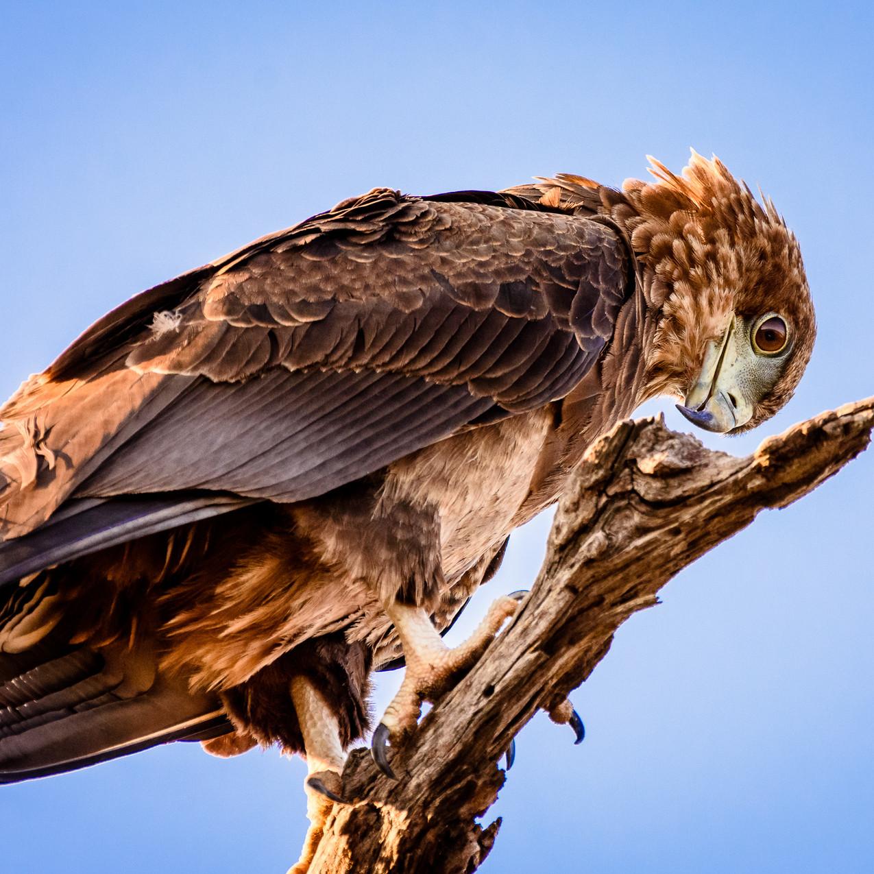 South Africa Kruger-611