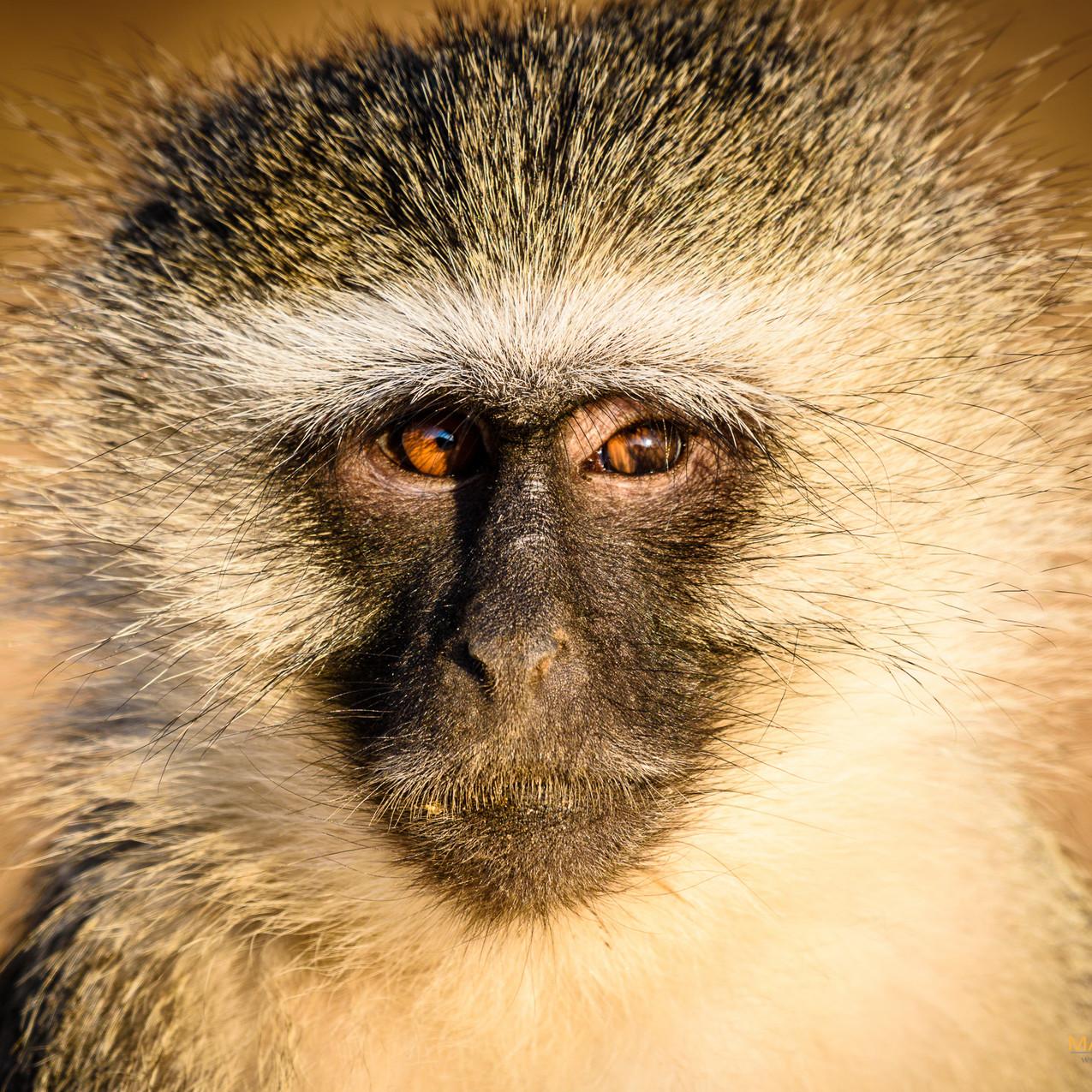 South Africa Kruger-705