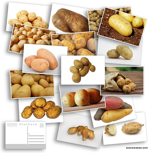 Potato Postcard Set - Set of 24 Postcards - Many Varieties of Potatoes - Russet