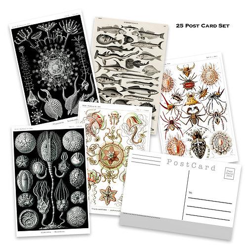 Natural Wonders Postcard Set - Set of 25 Postcards - Vintage - Nature