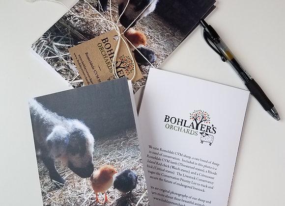 Lamb & Chicks Greeting Card Set