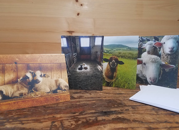 Lamb Note Cards