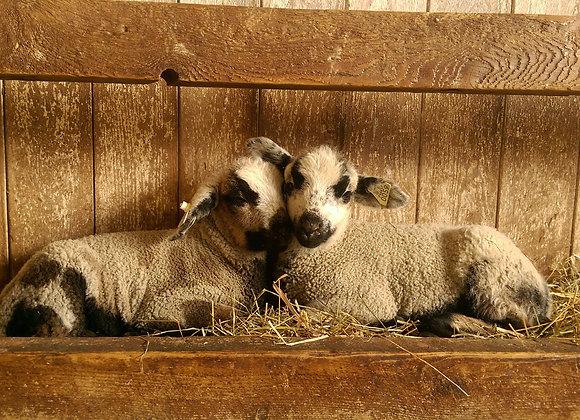 Ewe Lamb Deposit