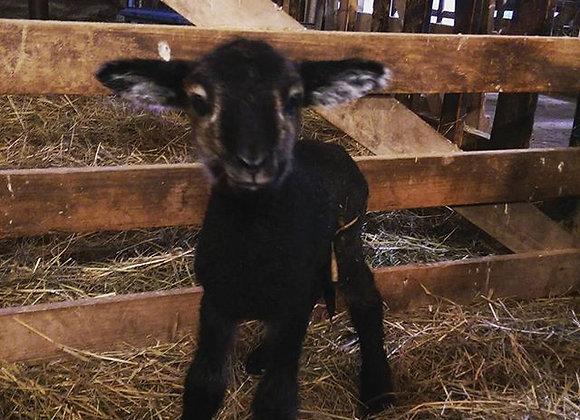 Ram Lamb Deposit