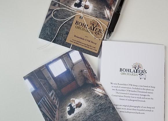 Lambs in Morning Light Greeting Card Set