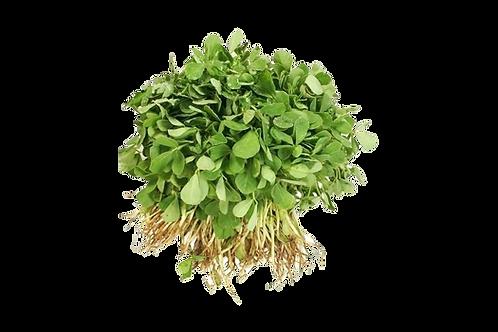 Purslane  (250 gr) (0.69 AED)