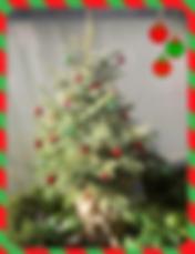 christmas tree shoot.png