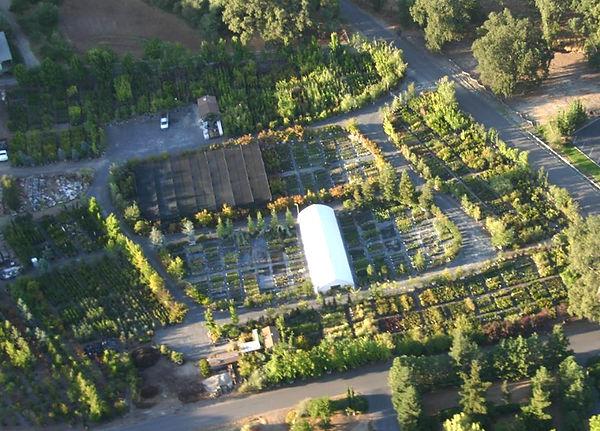 Big nursery Sonora CA