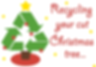 Live Christmas trees Sonora