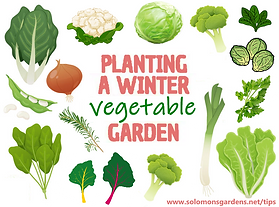 winter vegetable garden.png