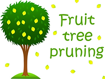 When to prune trees Sonora CA