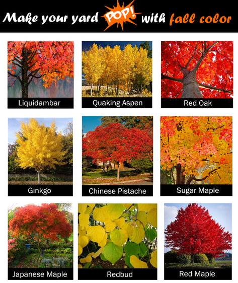 Trees with fall color