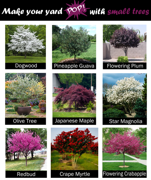 Trees for small yard