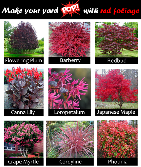 Plants with red leaves
