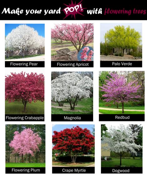 Trees that flower