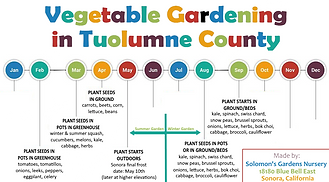 veg garden timeline.png